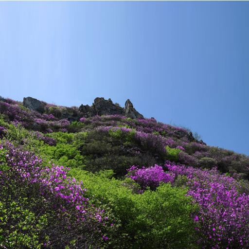 志愿活动助环保        大黑山风景区是大连